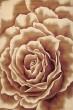 Product Image of Ivory (5338) Floral / Botanical Area Rug