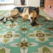 Product Image of Green, Ivory Transitional Area Rug