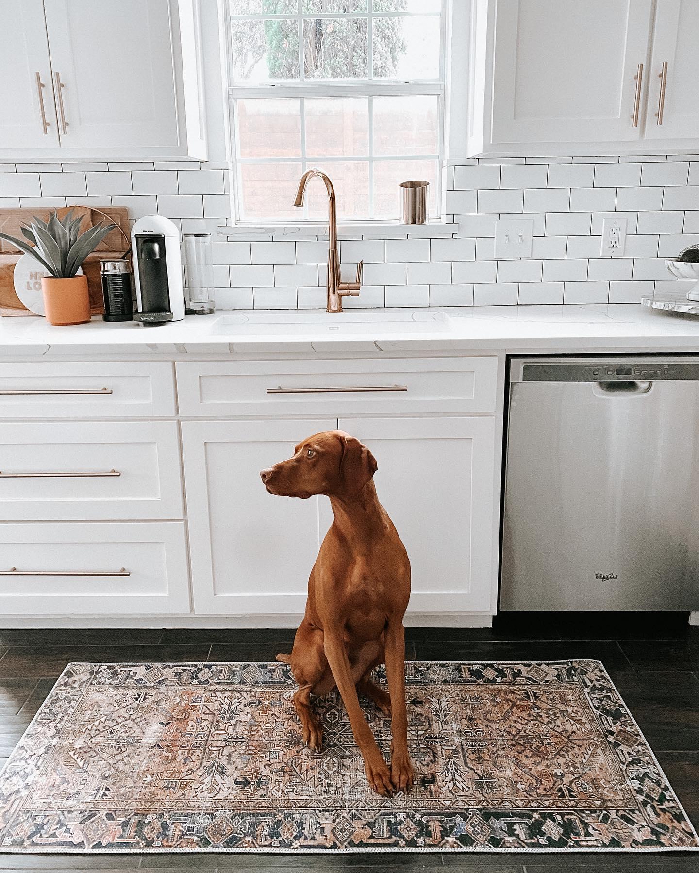 Pet Friendly Kitchen Decor Ideas
